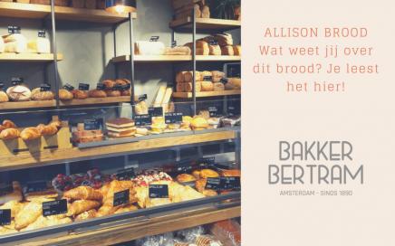 Allison brood